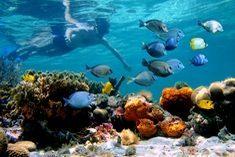 plongee-costa-rica